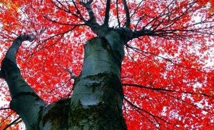 1109slideshowfallannarbor-9192011_horiz-large