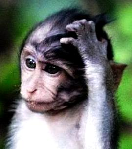 confused-monkey