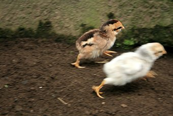 167241-stock-photo-white-animal-movement-brown-fear-running