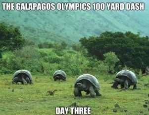 funny-galapagos-olympics-tortoise-turtles-racing-grass-pics