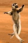 photo-of-funny-animal