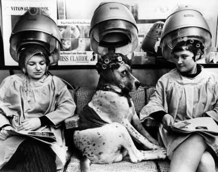 Dog Sitting Under Dryer in Beauty Salon
