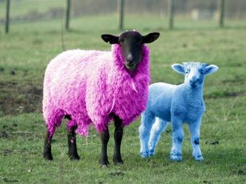 Funny-sheep-pictures