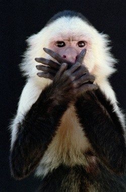 monkey-hand-over-mouth