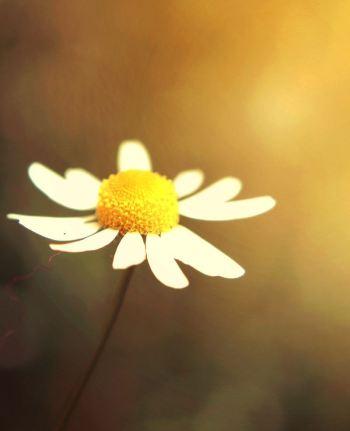 little_flower_by_kara_a-d52q4j8(1)