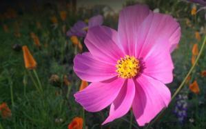bodyseedles-wildflower-seed-bombs-front-yard