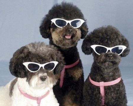 Sun_Glasses_For_Cool_Dogs