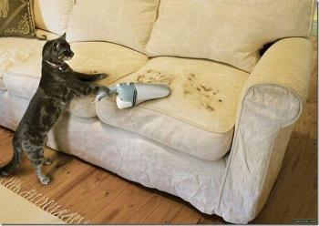 cat-cleaning