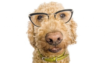 dog-wearing-glasses_shutterstock_59055754-640x385